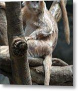 Jungle World Monkey2 Metal Print