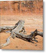Juniper Log On Sand Metal Print