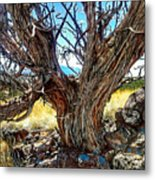 Juniper Monarch Metal Print