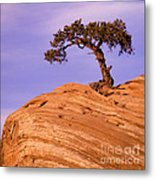 Juniper On Sandstone Metal Print