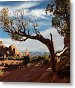 Juniper Tree And Sandstone Fins Metal Print