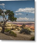 Juniper Tree On A Mesa Metal Print