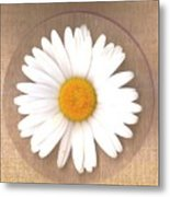 Just A Lonely Flower On Canvas Metal Print