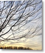 Just A Tree And Clouds Metal Print