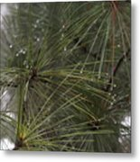 Just After The Rain 2 Metal Print