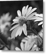 Just Black And White Metal Print