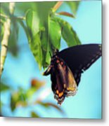 Just Hanging Out - Red-spotted Purple Butterfly Metal Print