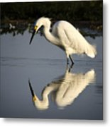 Just Like Looking In The Mirror Metal Print