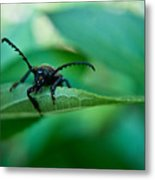 Just Looking For Another Beetle Metal Print