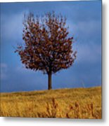 Just One Metal Print by Karen M Scovill
