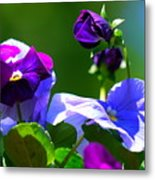 Just Pansy Metal Print