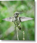 Just Spread Your Wings  Metal Print