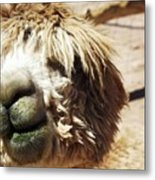 Just Too Cute To Be Ugly Metal Print