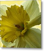 Just Yellow Metal Print