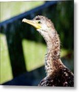 Juvenile Cormorant Profile Metal Print