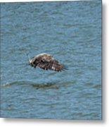 Juvenile Eagle Fishing Pickwick Lake Tennessee 031620161315 Metal Print