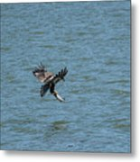 Juvenile Eagle Fishing Pickwick Lake Tennessee 031620161318 Metal Print
