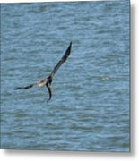 Juvenile Eagle Fishing Pickwick Lake Tennessee 031620161330 Metal Print