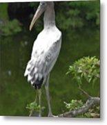 Juvenile Wood Stork Metal Print