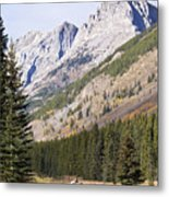 K-country And Bighorn Sheep Metal Print