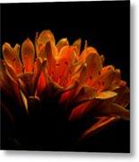 Kaffir Lily Metal Print