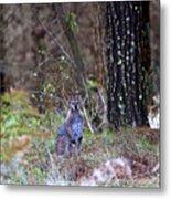 Kangaroo In The Forest Metal Print