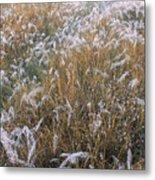 Kans Grass In Mist Metal Print
