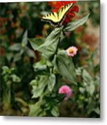 Kathy's Butterfly Metal Print