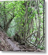 Kauai Forest Path For Secret Falls Metal Print