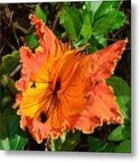 Kauai Hibiscus Metal Print