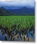 Kauai Taro Field Metal Print