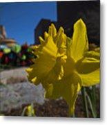 Kayak Launch Daffodil Cambridge Ma Metal Print