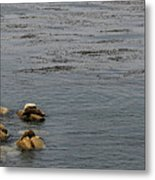 Kayakers And Seal Lions Metal Print