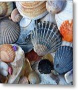 Kayla's Shells Metal Print