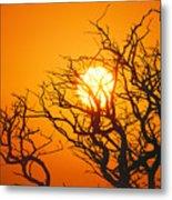 Keawe Tree At Sunset Metal Print