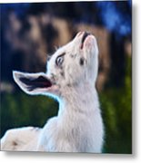 Keep Calm And Hold Your Head Up Metal Print
