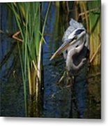Keeping An Eye Out For Fish Metal Print
