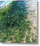 Kelp At Low Tide Line Metal Print