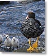 Kelp Goose With Goslings Metal Print