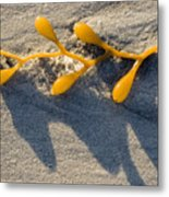 Kelp Washed Onto The Sand At Carmel Metal Print
