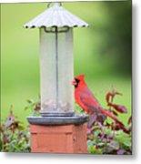 Kentucky Cardinal  Metal Print