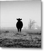 Kentucky Cows Metal Print