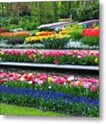 Keukenhof Tulips Ornamental Garden  Metal Print