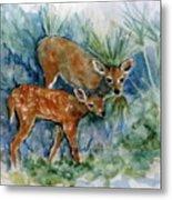 Key Deer Metal Print