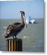 Key Largo Florida Pelican Yacht Metal Print
