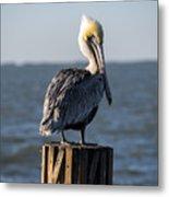 Key Largo Florida Yellow Headed Pelican Metal Print