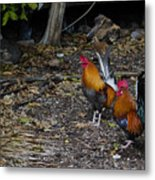 Key West Chickens Metal Print