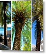 Key West Palm Triplets Metal Print by Susanne Van Hulst