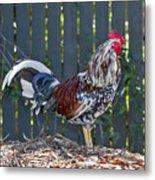 Key West Rooster 2 Metal Print
