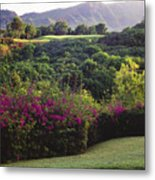 Kiele Course, Flowers And Vegetation Metal Print
